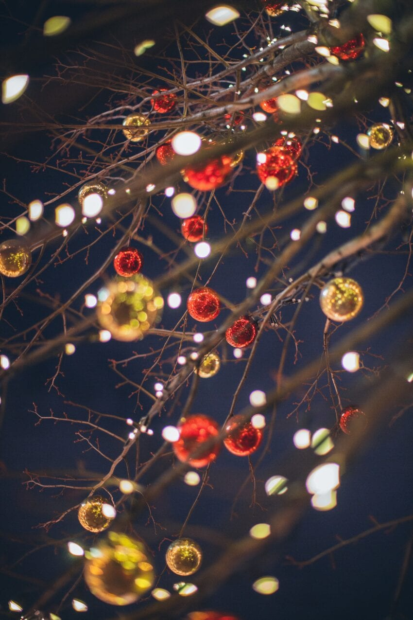Twin Cities Holiday Tree Lights Tour